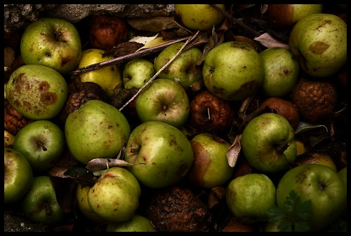 Pommes pourries - Rotten apples | by rore
