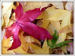 Boje jeseni 3