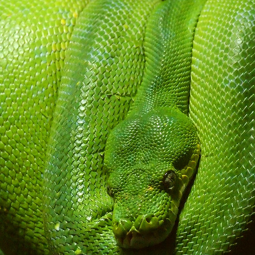 green snake | by Lumatic
