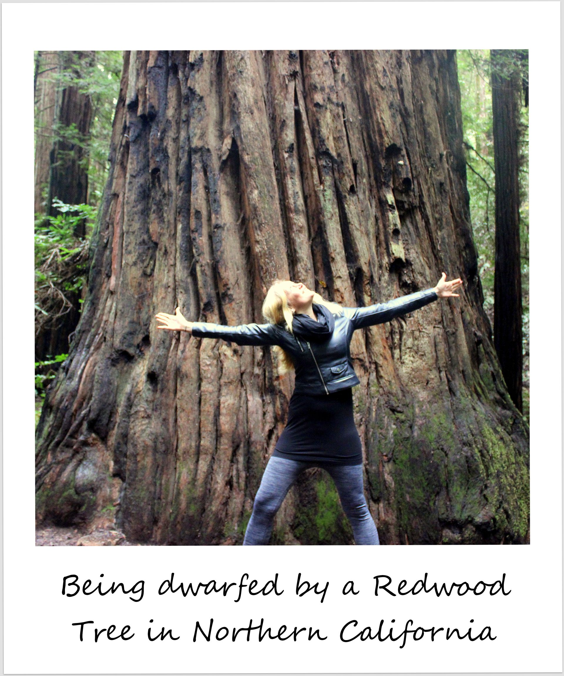 polaroid of the week usa california armstrong redwoods