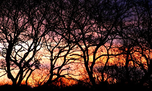 sunset through the tangled bare Trees | by Plot 58
