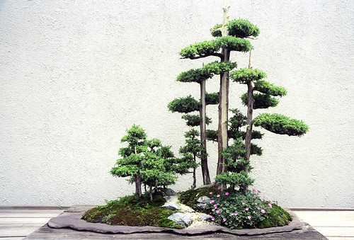 Bonsai Grove, Washington, DC | by Grufnik