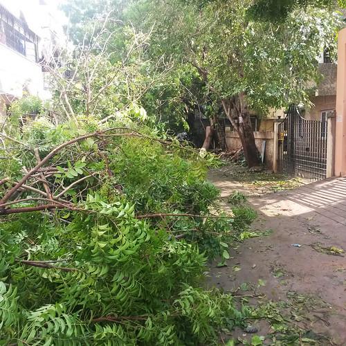 Vardha aftermath