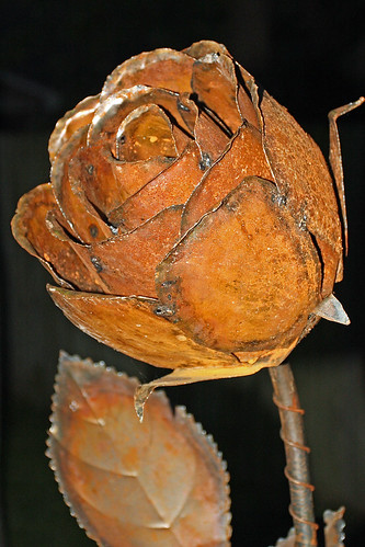 Rusty Rose | by photofriendly