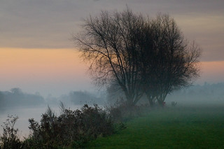 Misty trees by the Thames | by maz hewitt
