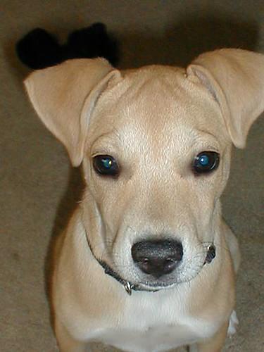 Sedona the dog