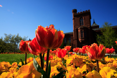 Smithsonian Castle | by ehpien