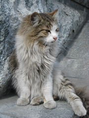 Stray cat, Moscow
