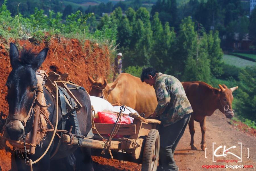 Yunnan_0109