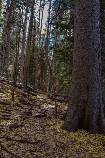 Trail of Humphreys Peak