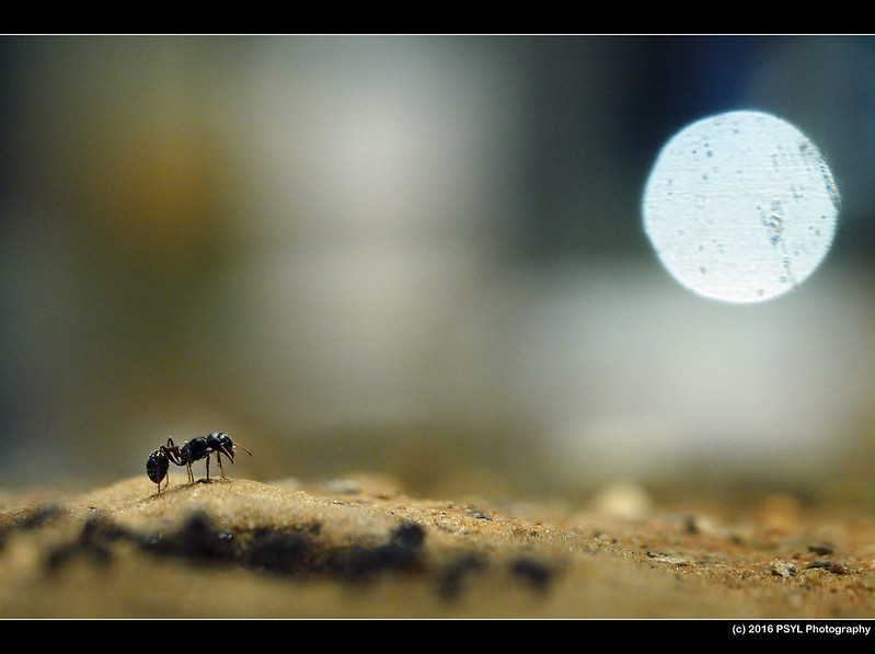 Ant on a hill