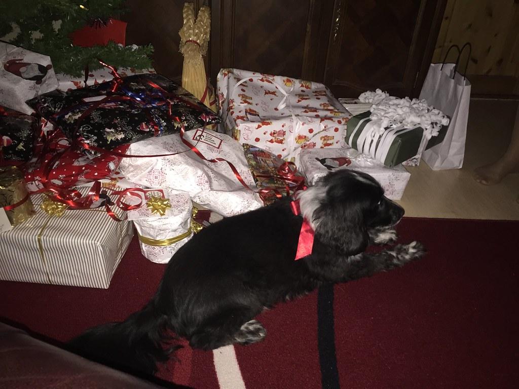 Zammy vaktar julklapparna