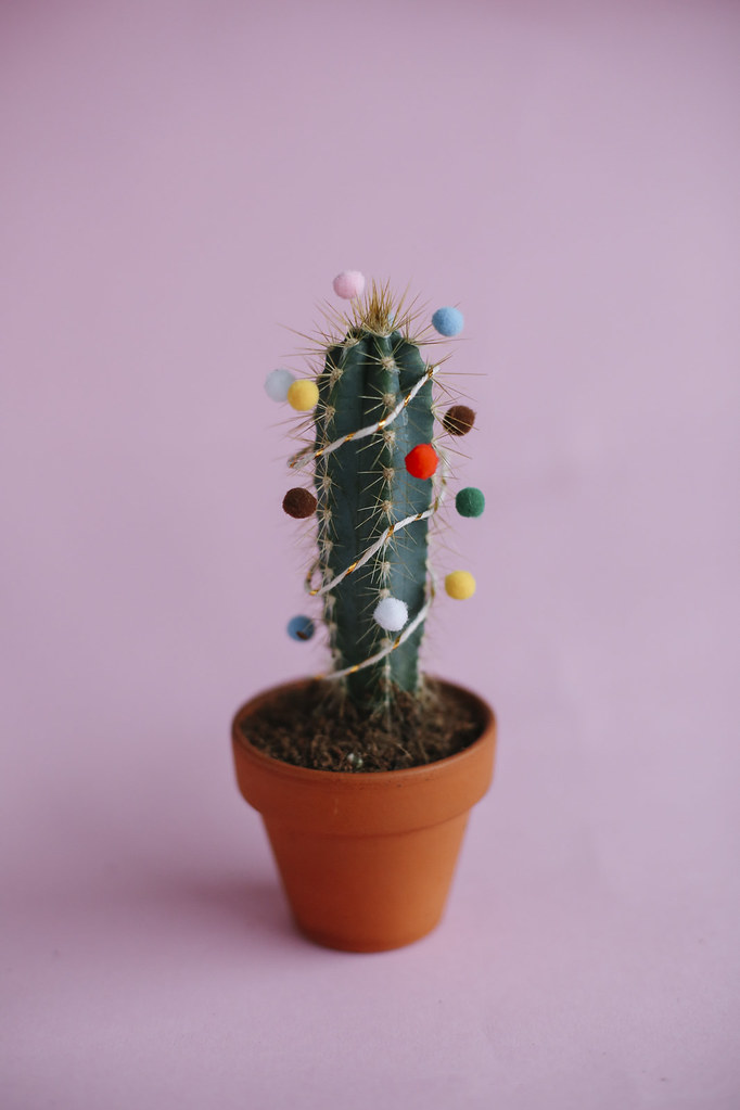MB1_8841edB, thecurlyhead, amelie n., the curly head, DIY, last minute gift idea, christmas-cacti, still life photography, cacti, Geschenkidee, Weihnachtskaktus, Weihnachtskakteen, blog,