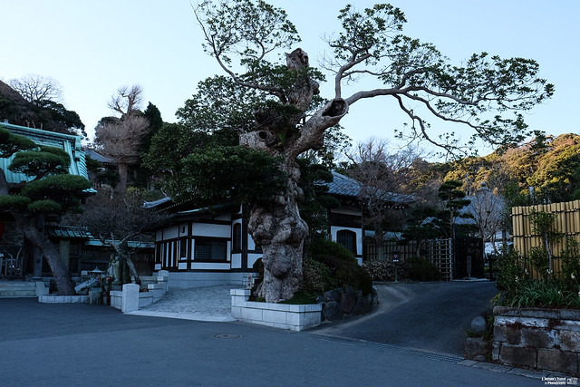 鐮倉 長谷寺