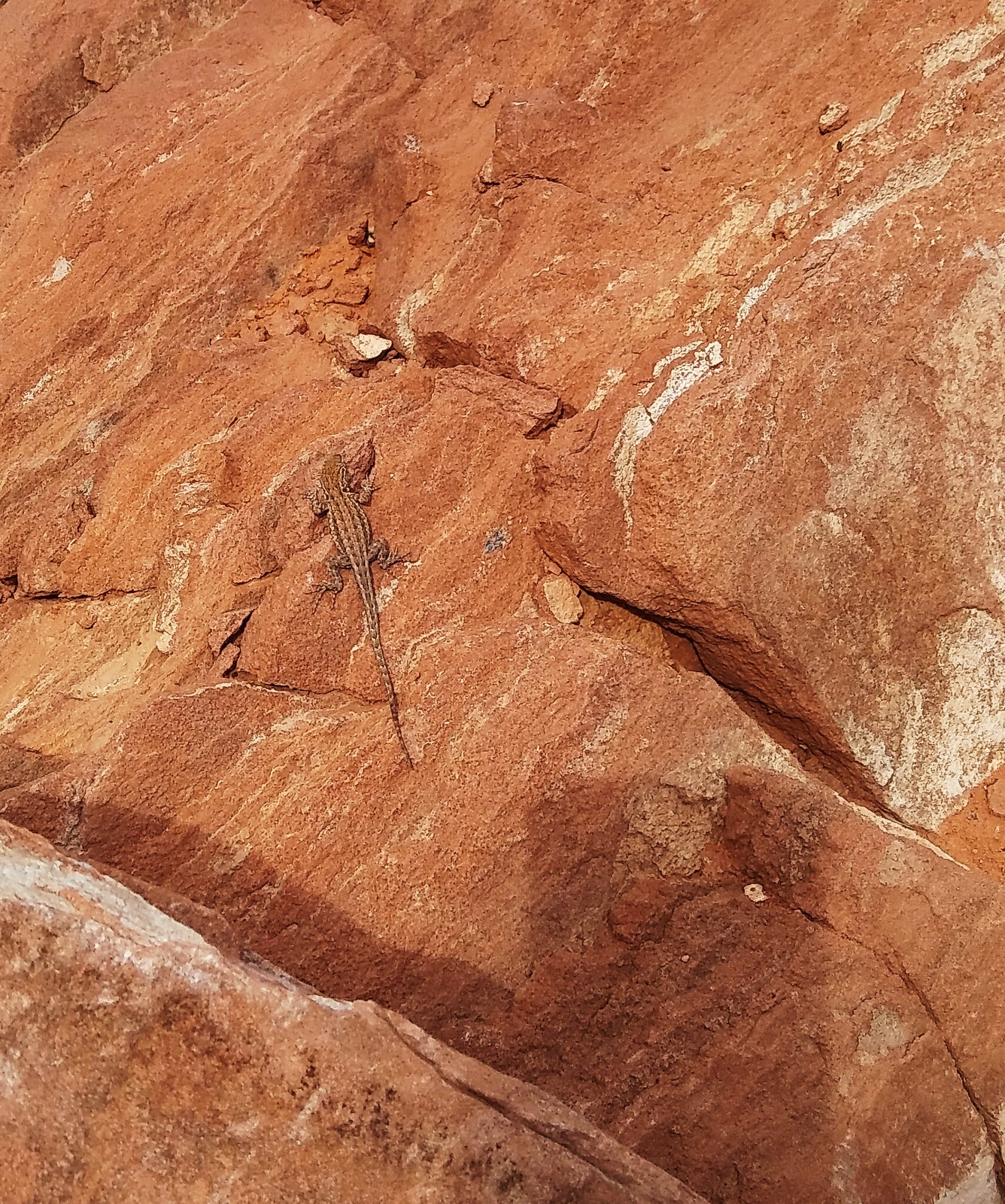 Texture, Valley of Fire, Nevada