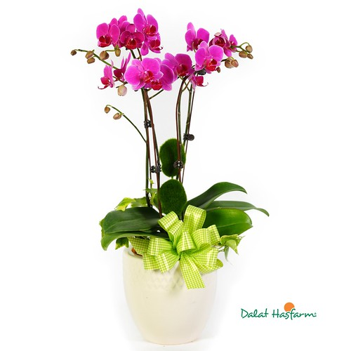 dịch vụ điện hoa tại Hà Nội
