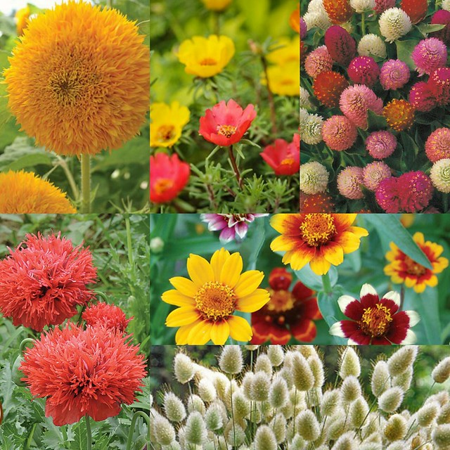 2017 Flower Garden Planning The Organic Gardening Community