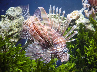 LionFish | by T-Town Photo Booth