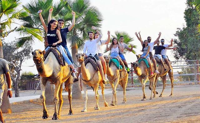 Парк верблюдов (Camel Park) Ларнака. Кипр