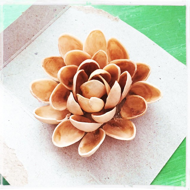 Pistachio Shell Succulents