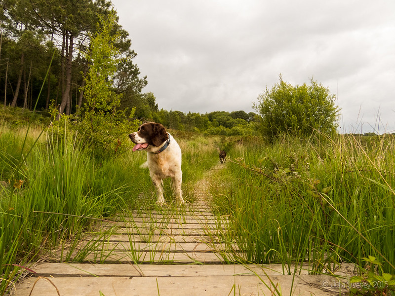Max on one of the boardwalks (with Jez in the background)