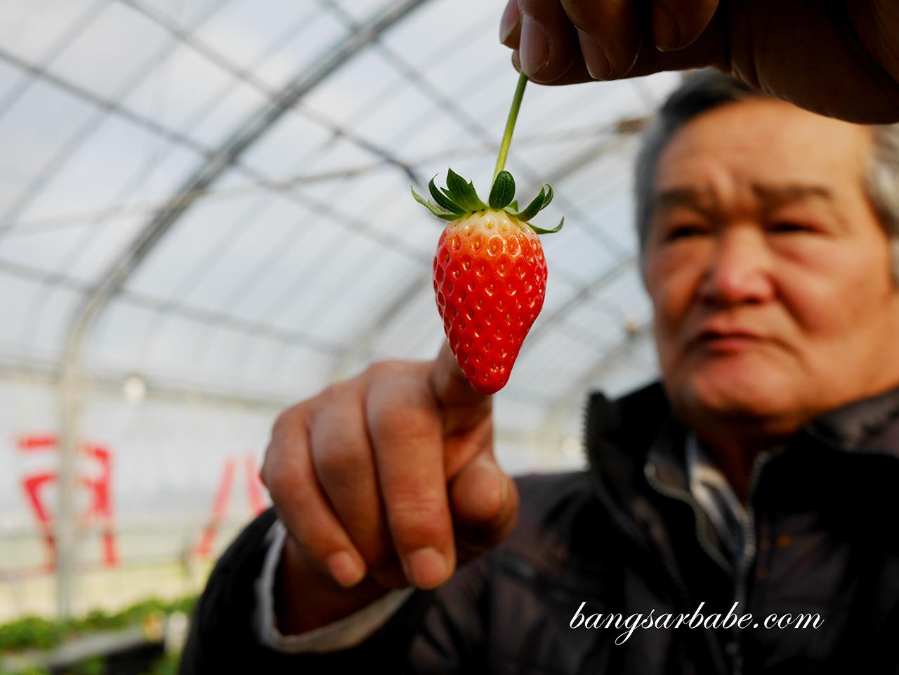 Mr. Yutaka Yasuda from Ichigo Farm