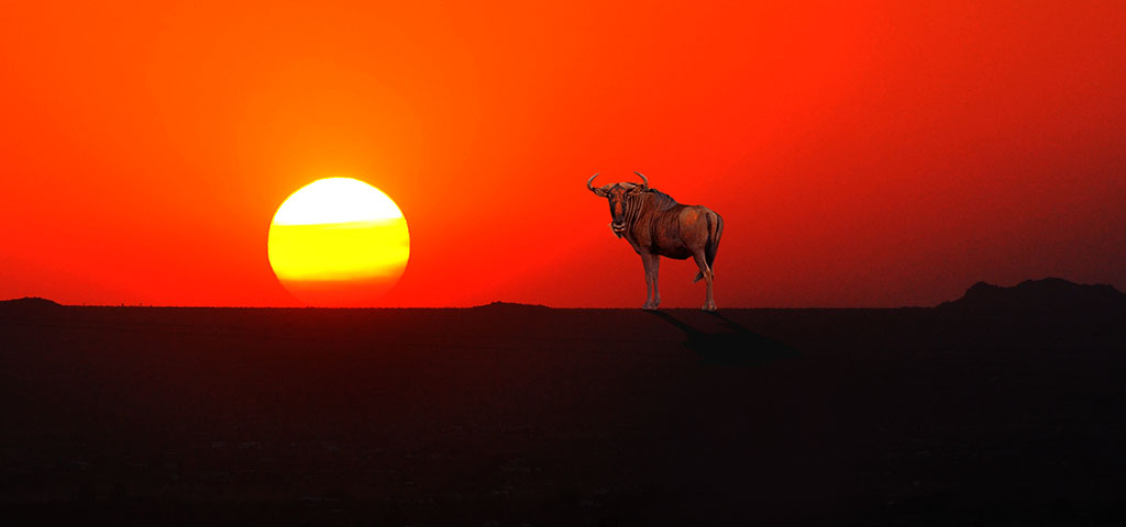 GNU_Horizon