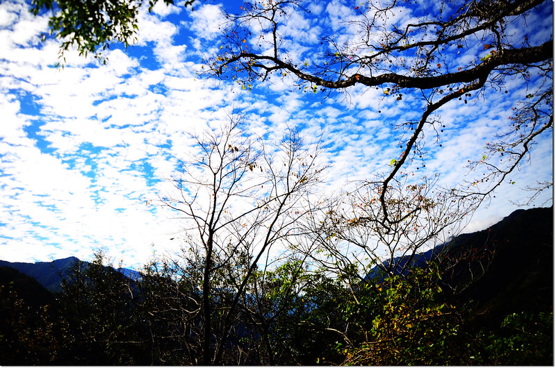 獅子尾山稜線楓香 4