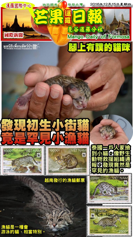 161215芒果日報--國際新聞--發現初生小街貓,竟是罕見小漁貓