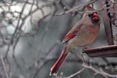 bird IMG_6385