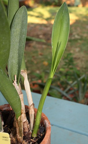blc_new_growth