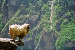 Tiger Leaping Gorge - Ram | by josh-n