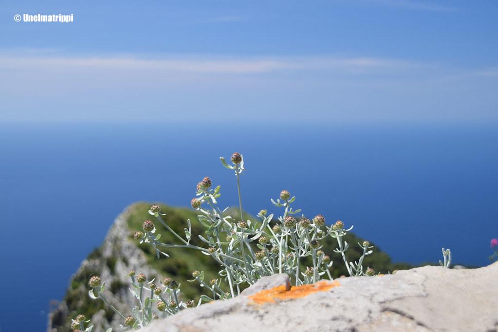 20160708-Unelmatrippi-Capri-DSC_0923
