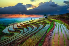 canhdong_sapa