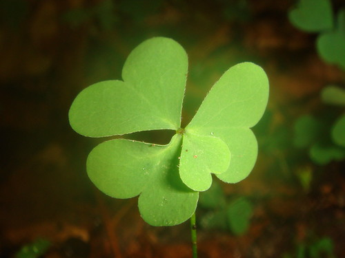 Four leaf clover | by MrVJTod