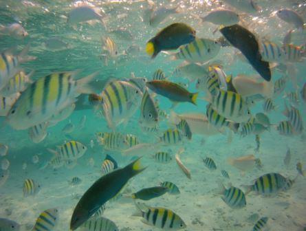 ikan di pulau harapan