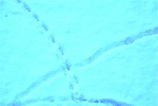 Snow 06.01 (4)