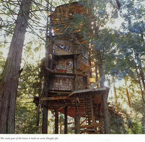 The Scurlock Treehouse Built By A Bankrobber In Olympia W