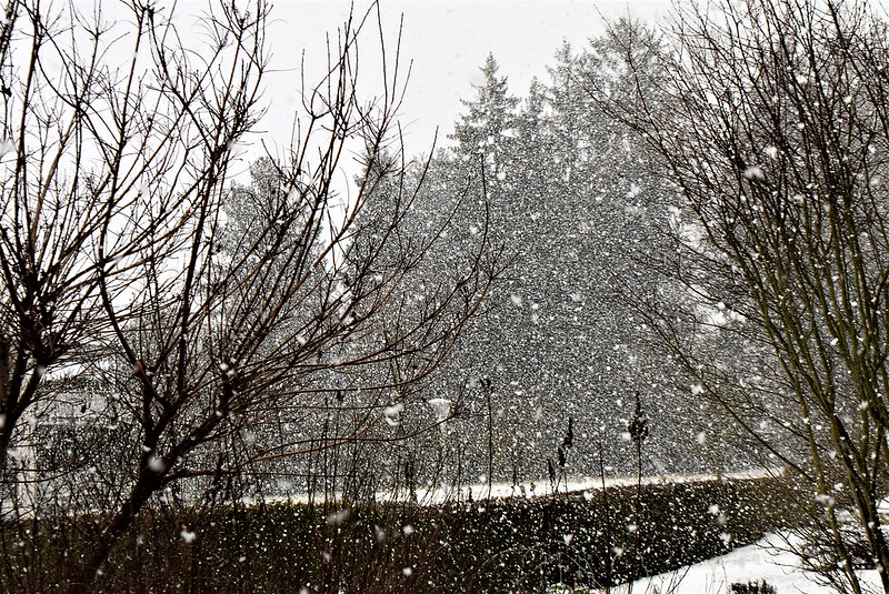 Snow 05.01 (4)