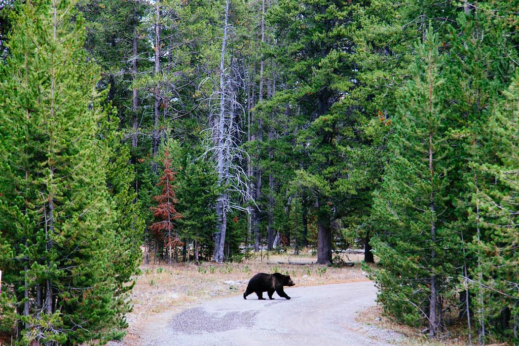Yellowstone 27
