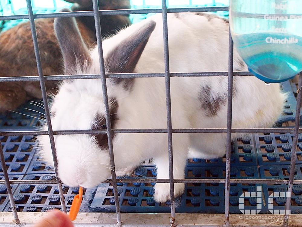 animal corner, farm, farm tour, farmart centre, singapore, where to go in singapore, 农市中心, 農市中心, review,farmart,rabbit,bunny