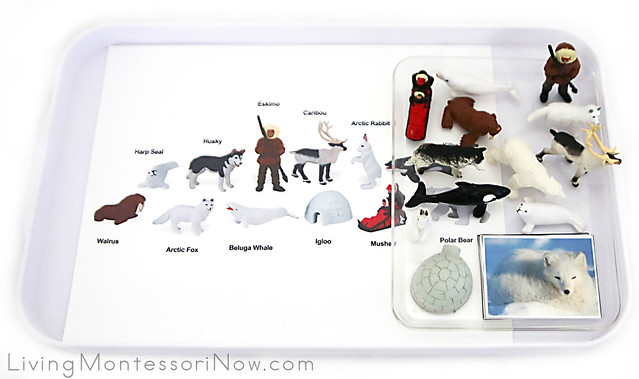Arctic Tray with Safari Ltd Arctic Figures Plus Arctic Cards