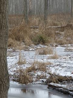 Icy Wetland