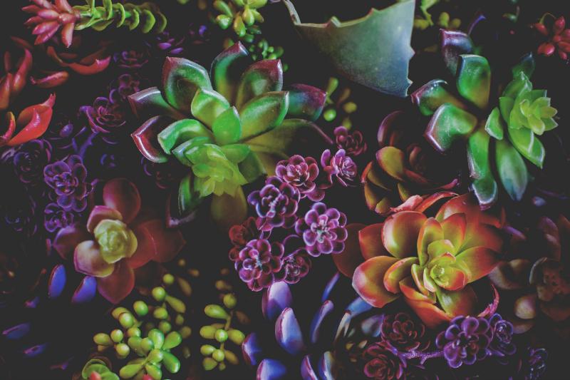 succulents vivatramp