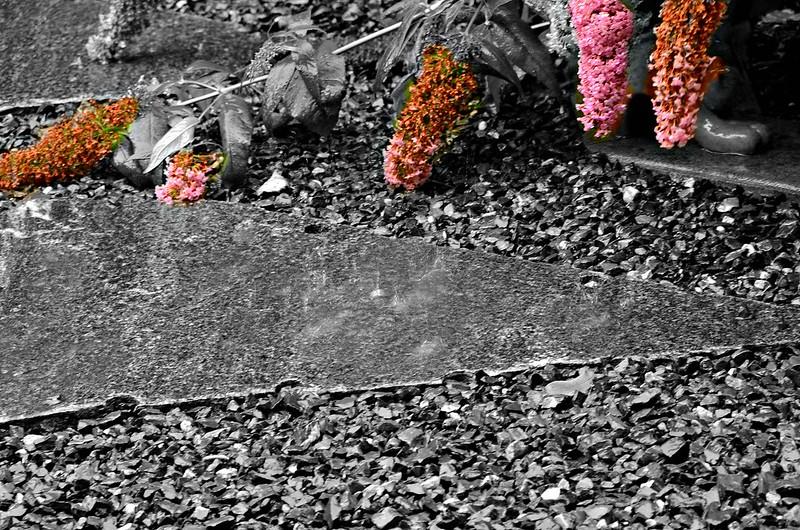 Rain in front garden 31.07 (6)
