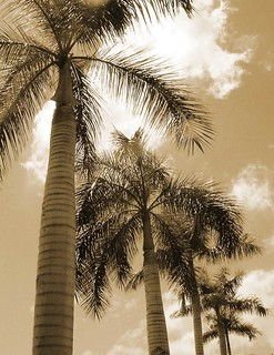 Palms | by kaneblues