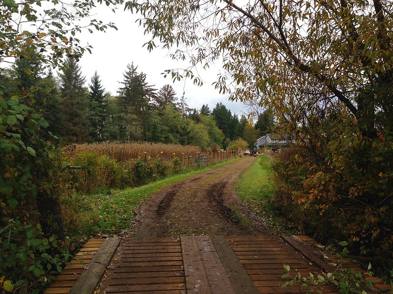Comox Valley Pumpkin Patch
