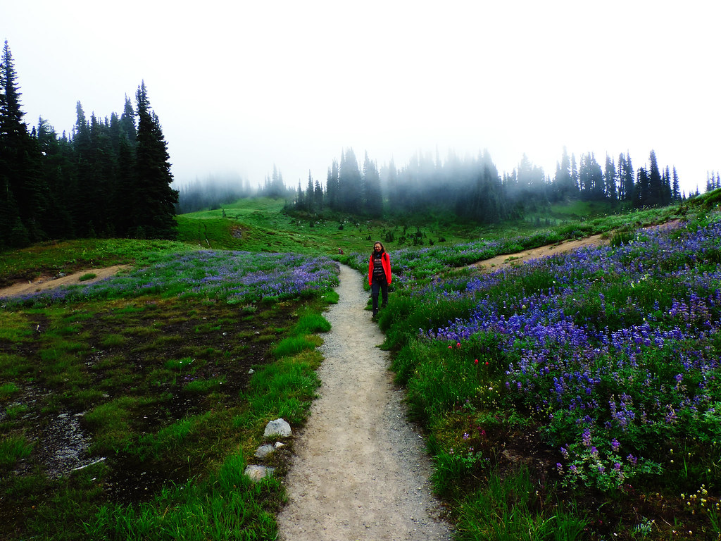 How To Create That Perfect Travel Itinerary: Mount Rainier National Park, WA, USA