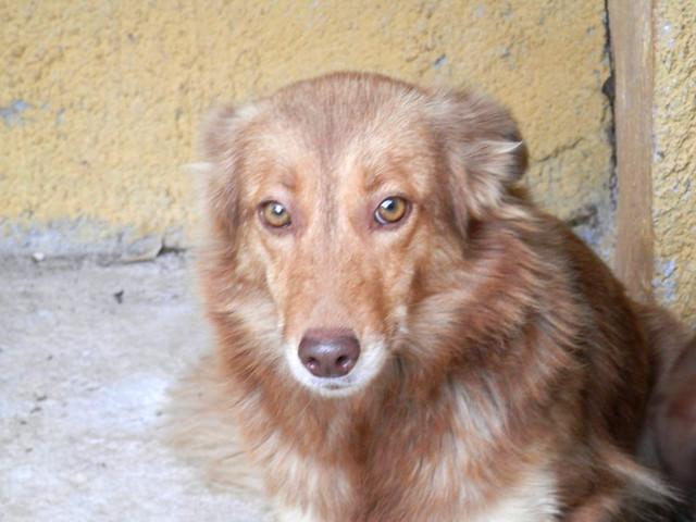 Litsa for adoption