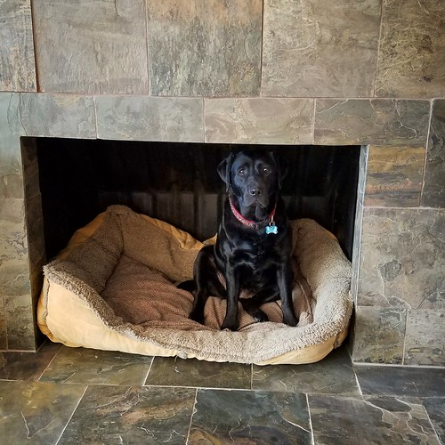 dog in a fireplace